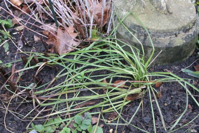 Kniphofia (= Tritoma) - faux Aloe - Page 3 Img_1813