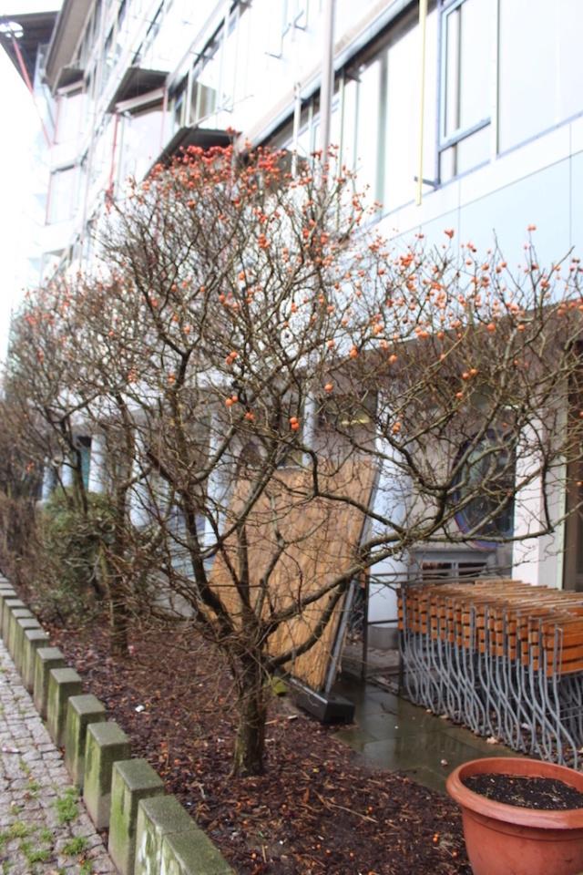 Rosaceae inconnue Inconn11