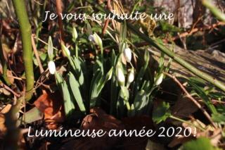 Jardins d'hiver Lumine10