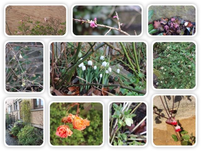 Jardins d'hiver Mosaiq14