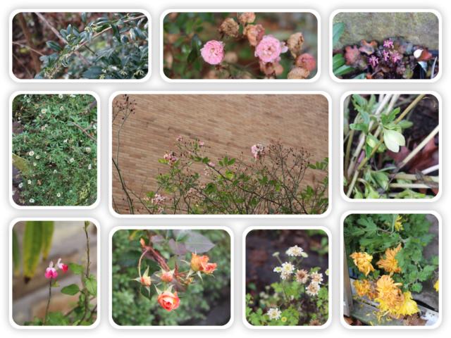 Jardins d'hiver Mosaiq15