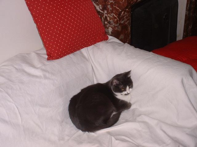 KITTY femelle grise et blanche de 1 mois  - Page 3 Photo_23