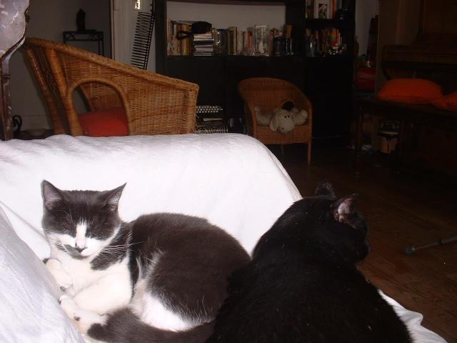 KITTY femelle grise et blanche de 1 mois  - Page 3 Photo_24