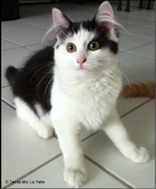 NALA rebaptisée TAGADA femelle noire et blanche de 4 mois Pictur15