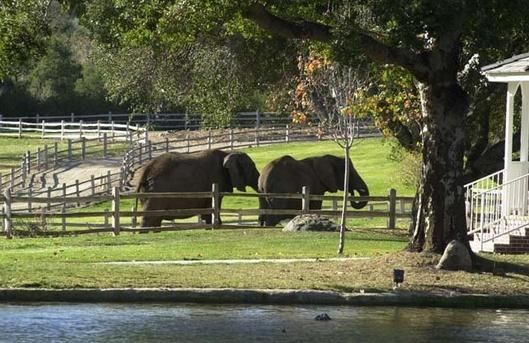 Neverland Valley Ranch - Pagina 4 Bghhjs10