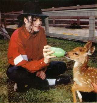 Neverland Valley Ranch - Pagina 4 Dxivrl10