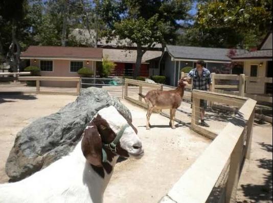 Neverland Valley Ranch - Pagina 4 Ghugud10