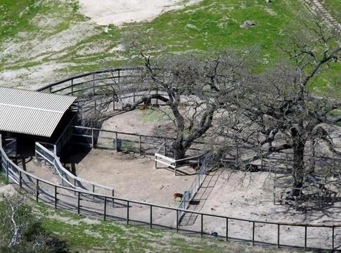 Neverland Valley Ranch - Pagina 4 Gugfuy10