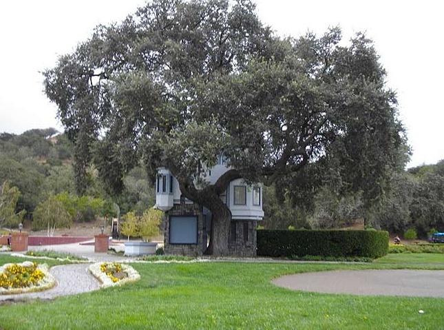 Neverland Valley Ranch - Pagina 3 Yuhuh10