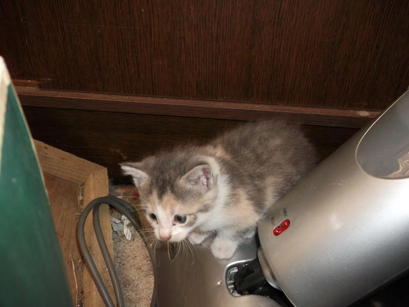 petits chatons recherchent maison d'adoption Dscf0014