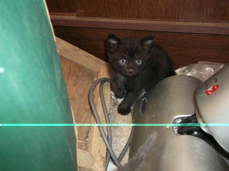 petits chatons recherchent maison d'adoption Dscf0015
