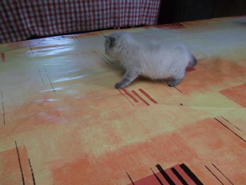 petits chatons recherchent maison d'adoption Dscf0016