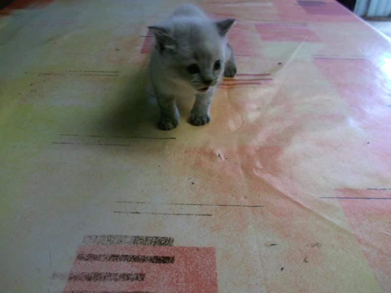 petits chatons recherchent maison d'adoption Dscf0017