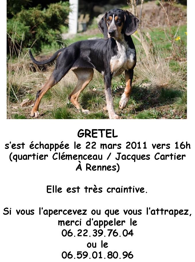 GRETEL , en fugue, adoption suspendue  - Page 14 Bbb14