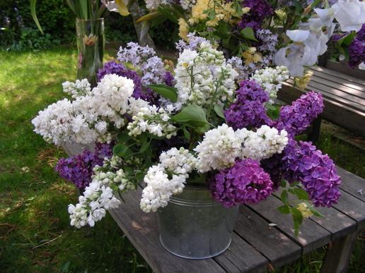 Le printemps de Michel Fugain 1_1_1683