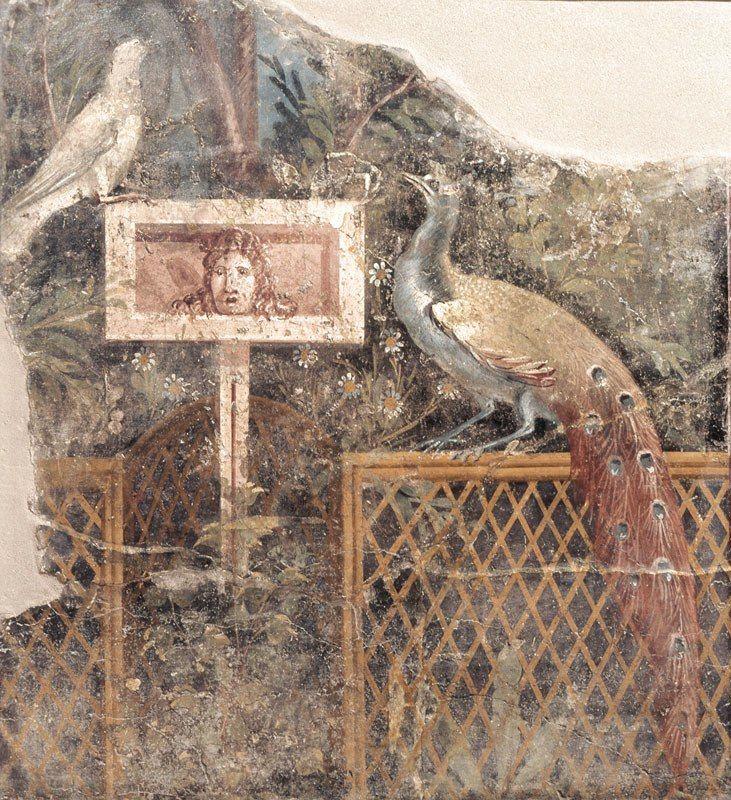 LE PAON: l'oiseau aux cent yeux  - Page 2 1_1_2052
