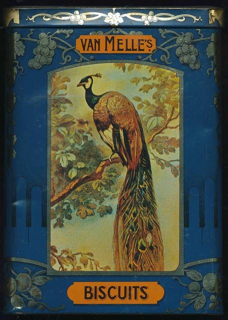 LE PAON: l'oiseau aux cent yeux  - Page 2 1_1_2089
