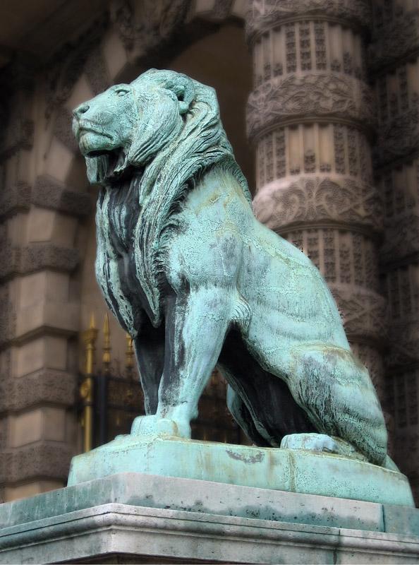 Le LION dans tous ses états 1_1_2397