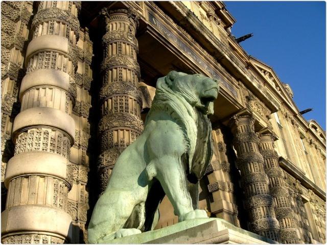 Le LION dans tous ses états 1_1_2398