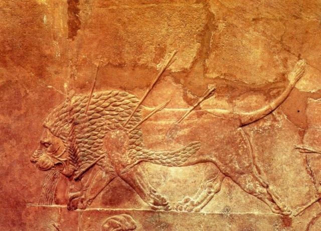 Le LION dans tous ses états 1_1_2612