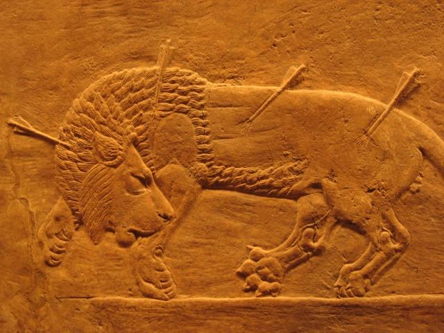 Le LION dans tous ses états 1_1_2613