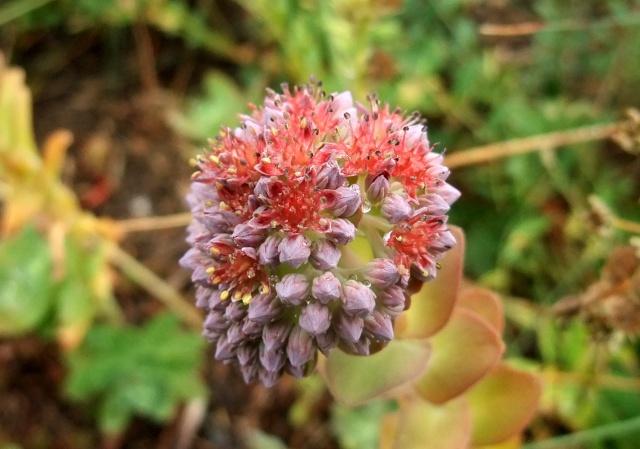 ART DU JARDIN jardins d'exception - fleurs d'exception 1_1_2985