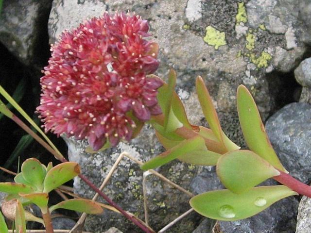 ART DU JARDIN jardins d'exception - fleurs d'exception 1_1_2986