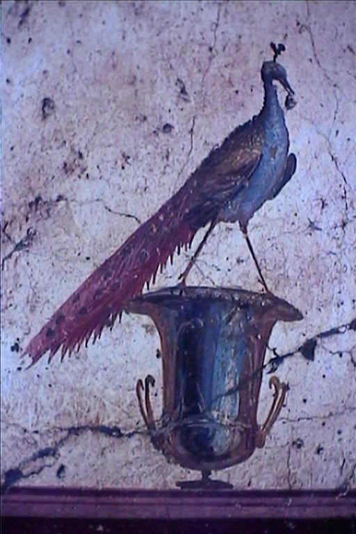 LE PAON: l'oiseau aux cent yeux  - Page 6 _1_a1066