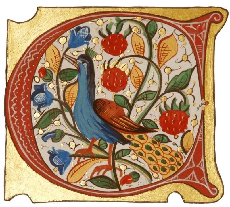 LE PAON: l'oiseau aux cent yeux  - Page 6 _1_a1244