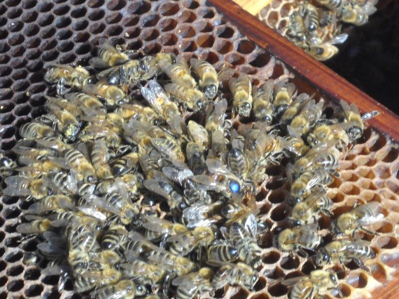 une abeille ne fait pas le printemps. 33310