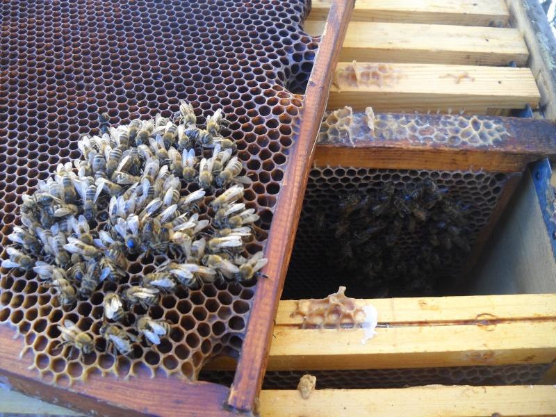 une abeille ne fait pas le printemps. 44410