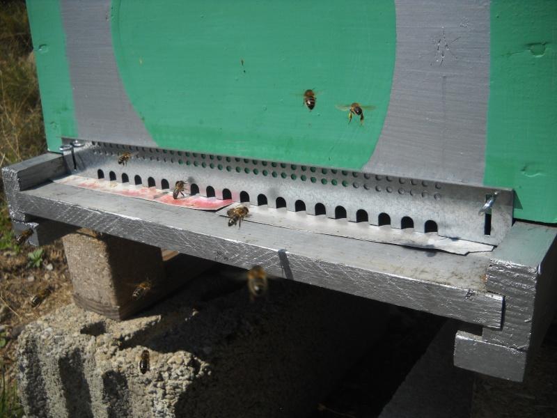 Comptage du varroa Ofset410