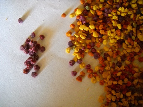 pollen violet Pollen14