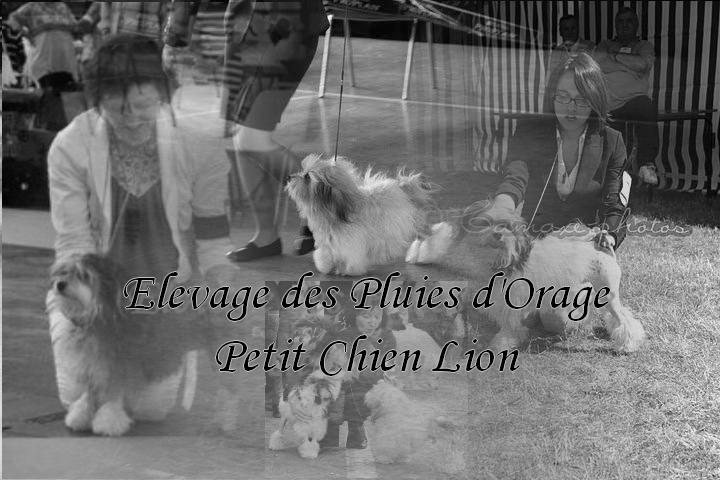 Petits Chiens Lions des Pluies d'Orage Pubsit10