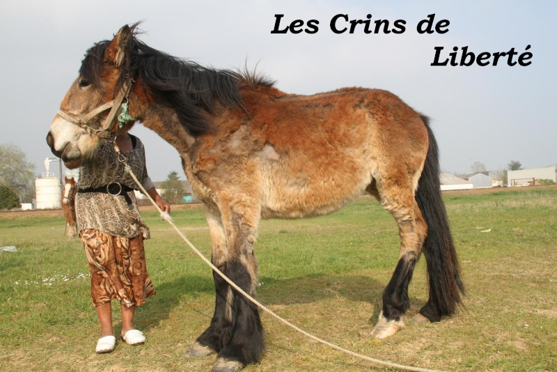 dept 41 Louloute Trait ONC sauvée par Justine!!!!!!!! (Avril 2012) Loulou10