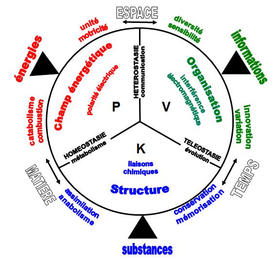 Les bases systémiques de la biologie et de la médecine Mif_ph10