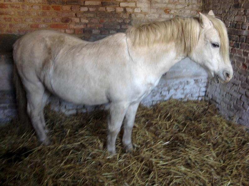 VENUS - ONC typée Welsh née en 1996 - adoptée en juin 2011 par Florent Venus_15