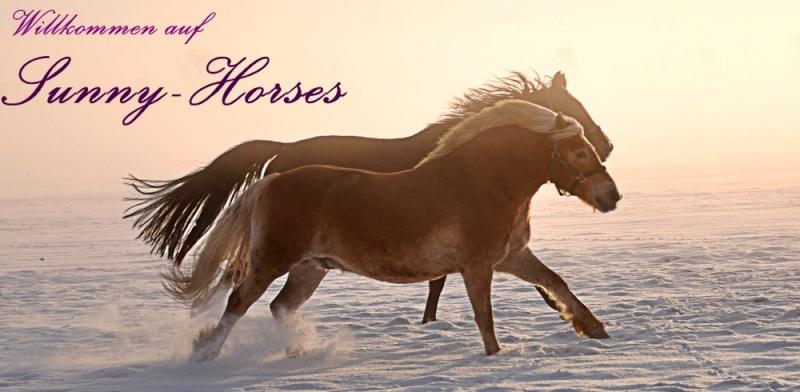 Sunny-Horses