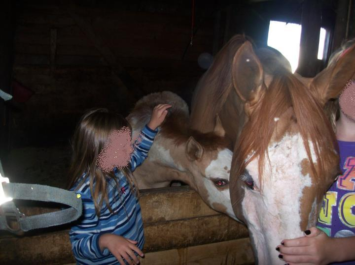 Moncton-area horse abuse/neglect case Missin10