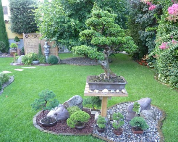 Dove coltiviamo i nostri bonsai - Pagina 13 1_giar10