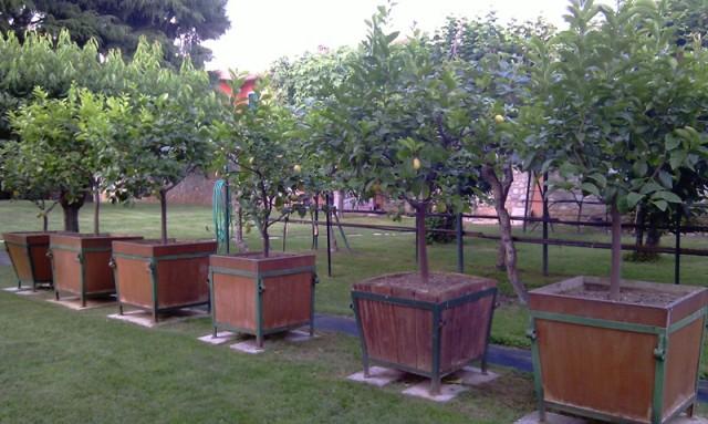 Dove coltiviamo i nostri bonsai - Pagina 13 Imag4533