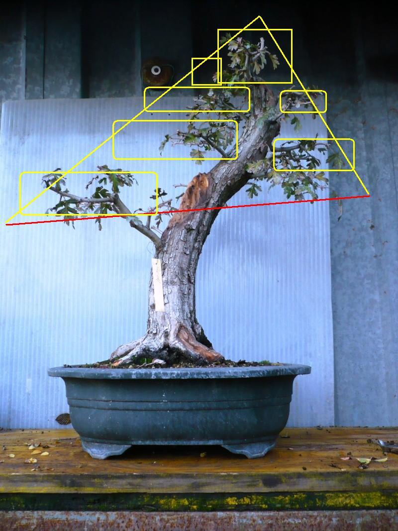 Un biancospino che diventa bonsai...... - Pagina 3 P1060810