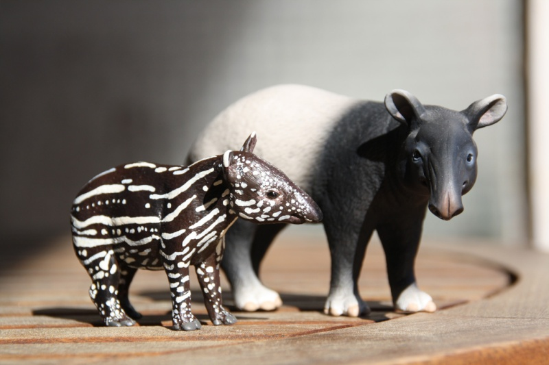 I received that wonderful tapir calf from Ana ... Imagen44