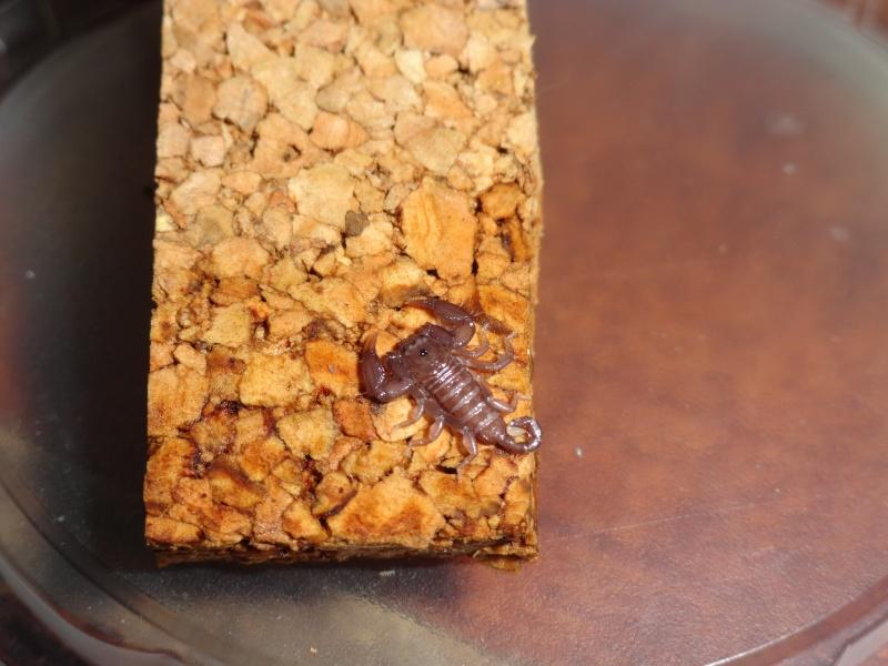 Envyizm's scorpion pictures - Page 3 Dsc00013