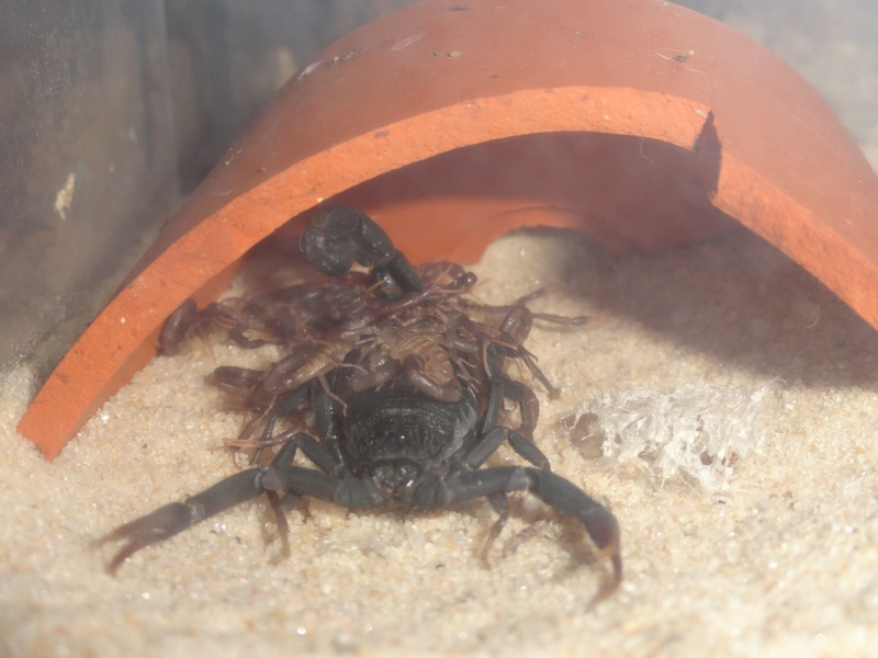 Envyizm's scorpion pictures - Page 3 Dsc00015