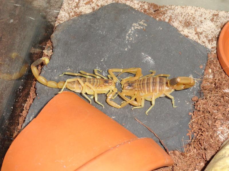 Envyizm's scorpion pictures - Page 3 Dsc00017