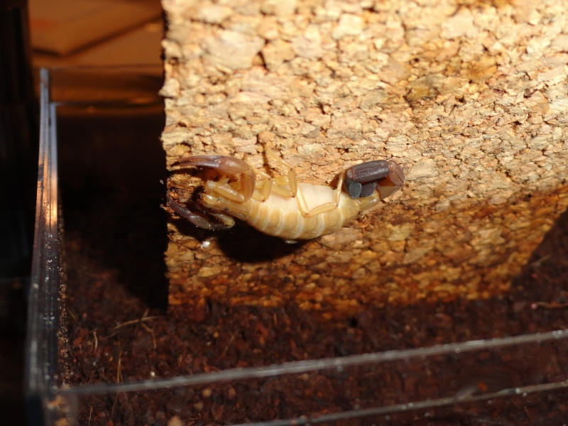 Envyizm's scorpion pictures - Page 3 Dsc00020