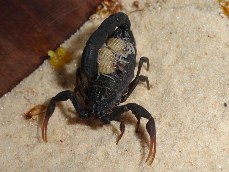 Envyizm's scorpion pictures - Page 4 Dsc00110