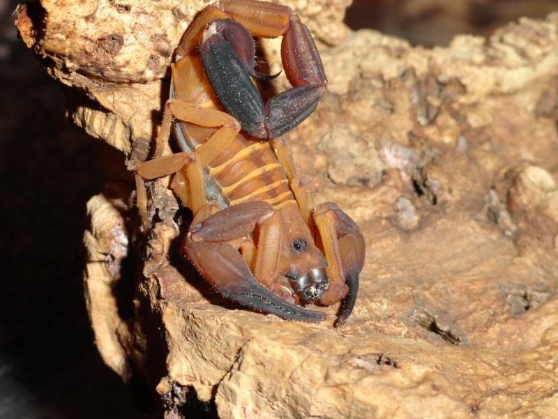 Envyizm's scorpion pictures - Page 4 Dsc00113