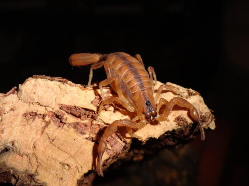 Envyizm's scorpion pictures - Page 4 Dsc00115